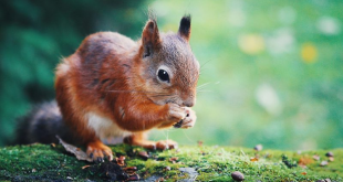 Dashboards Everywhere and Along Comes Squirrel Feature Image